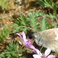 Mały motyl