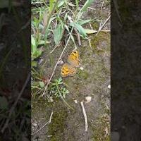 Motyl który co krok uciekał.....