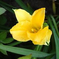 Żółty, jak przystało na lidera :))