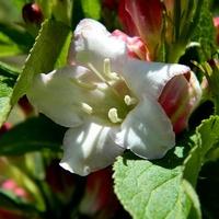 Pierwsze kwiatki:)