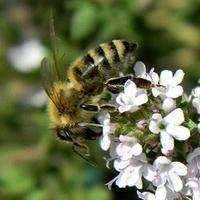 Pszczółka w pracy:)