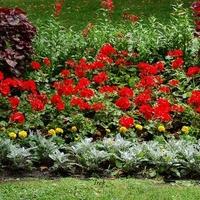 rabata kwiatów w parku