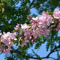 Różowa gałązka w parku.