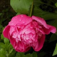 Różowa Wam się klania :)