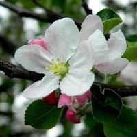 Różowe i białe:)