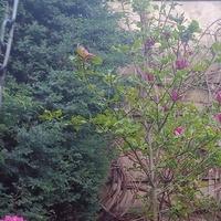 Różowo w ogrodzie :)