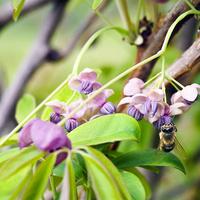 Usługi pszczółki