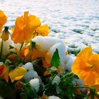 w śniegu .........