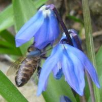 Światowy Dzień Pszczół! :)))