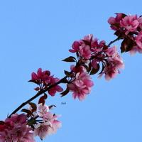 Zrobiło się kolorowo, kwitną drzewa