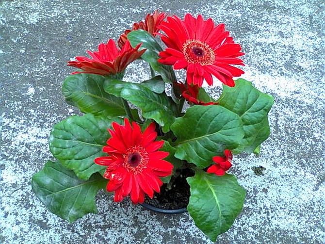 Bukiet kwiatów w doniczce :)