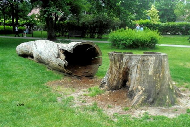 Było drzewo w parku, nie ma drzewa