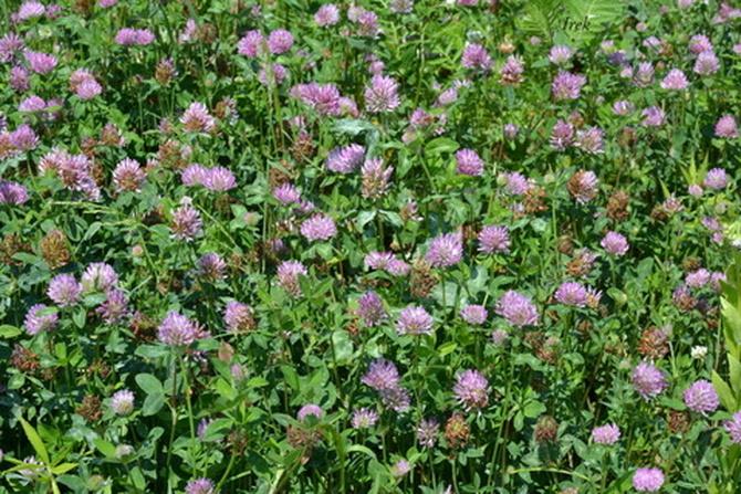 łąka z kwiatami