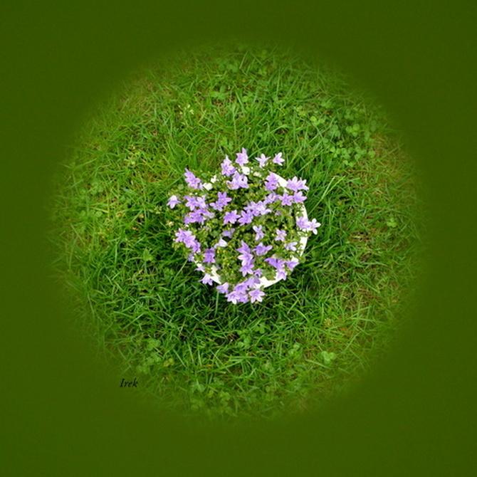 Kwiaty na kuli