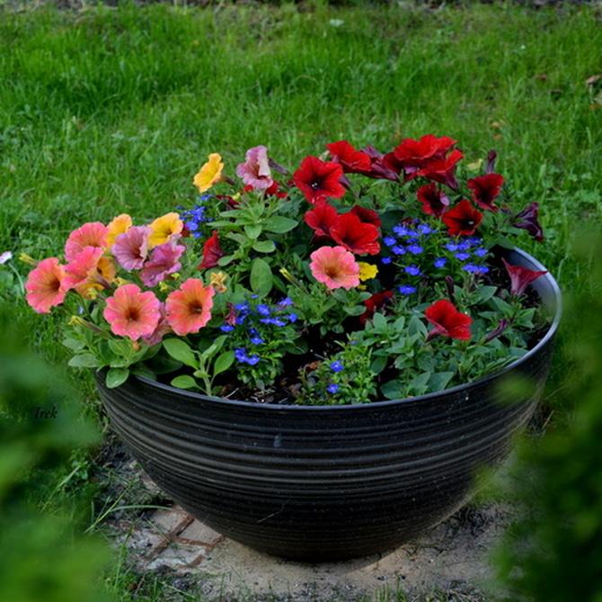 kwiaty w różnych kolorach