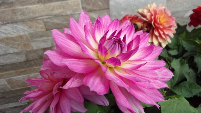 Prawdziwe kwiatki wg niektórych.