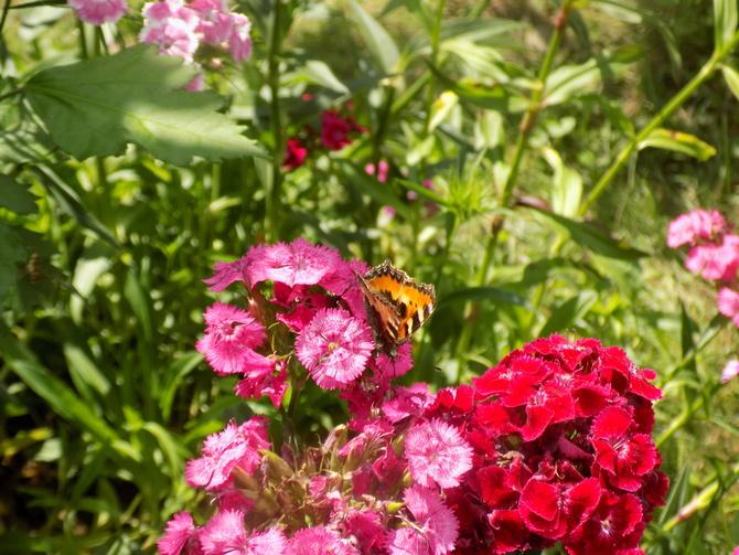 Wreszcie jakiś motyl :)
