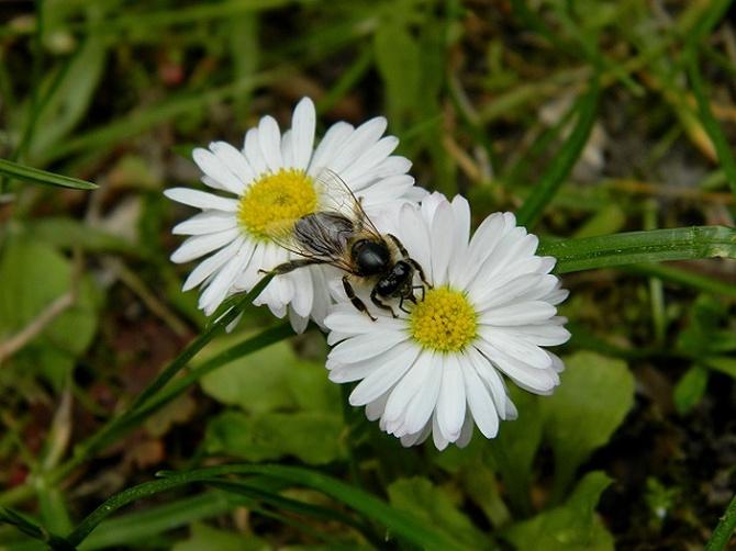 Z kwiatka na kwiatek;)