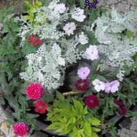 donica z kwiatami w parku na Mazowszu