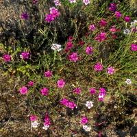 drobne kwiaty łąkowe