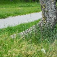 dziwne drzewo w parku