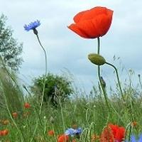 Kolory łąki:)