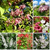 Krzewy kwitnące w czerwcu