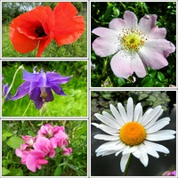 Kwiaty czerwca