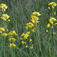 kwiaty łąkowe