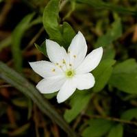 Leśny kwiatuszek:)