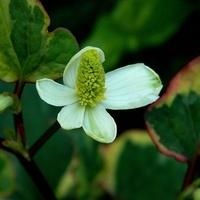Liście kolorowe, kwiat biały:)