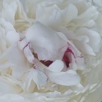Muśnięta różem......