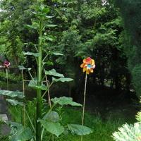 Nieznana roślina w ogrodzie