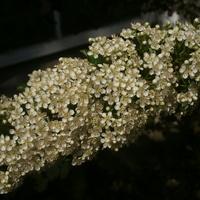 Ognikowe kwiatuszki...