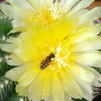 Poranny smakosz nektaru