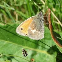 Posucha z motylkami