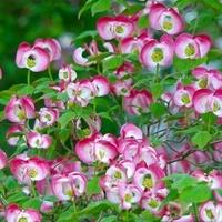 różowa gałązka...