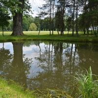Staw w parku w Radziejowicach