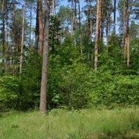 W lesie na Mazowszu było pięknie.