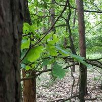 W lesie na spacerze....