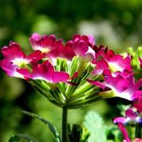 Świecące kwiatki;)