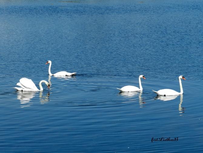 Łabędzie-Obszary  Natura 2000