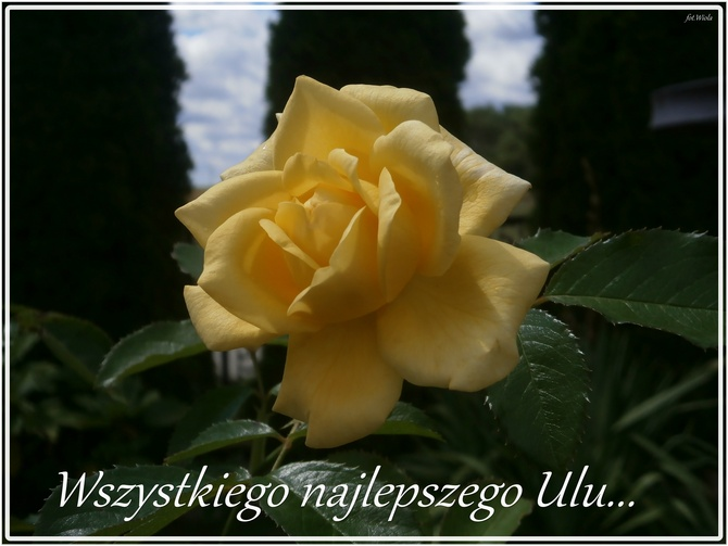 Dla ULI......