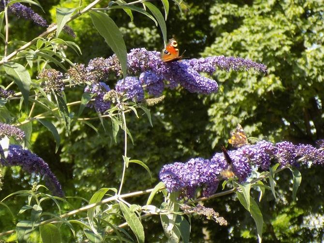 Dzisiaj dzień z motylami :)