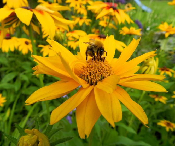 Kwiaty i pszczoła