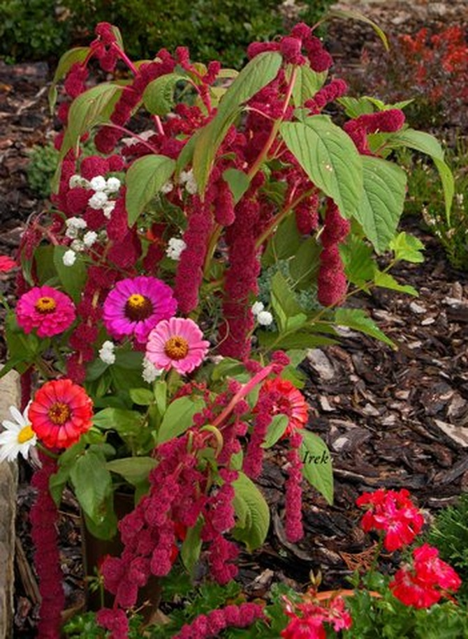 kwiaty różne