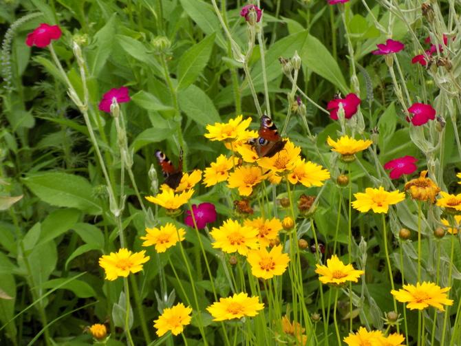 Polowanie na motyle