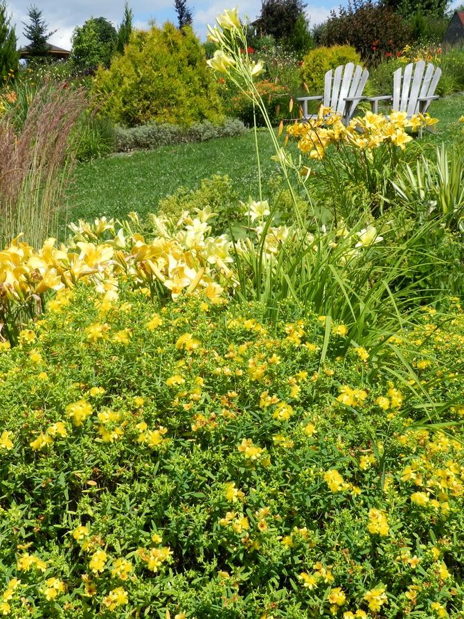 Rabata żółta-Arboretum w Wojsławicach