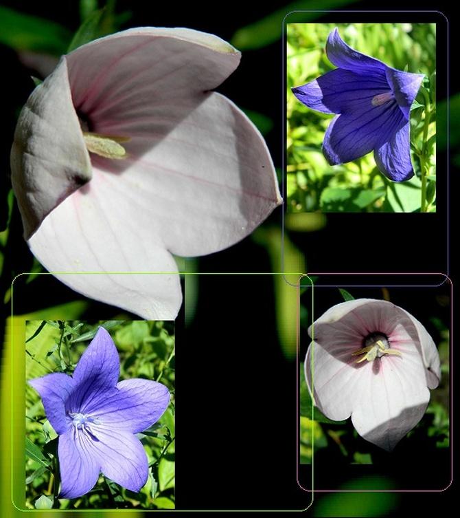 Różowe i niebieskie:)