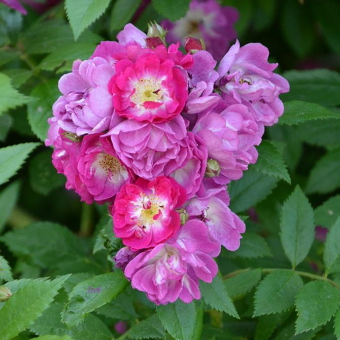 serce (z kwiatów)